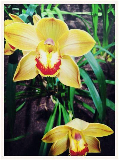 Orchids AMPt_community Flower Exhibition AMPt_ Community