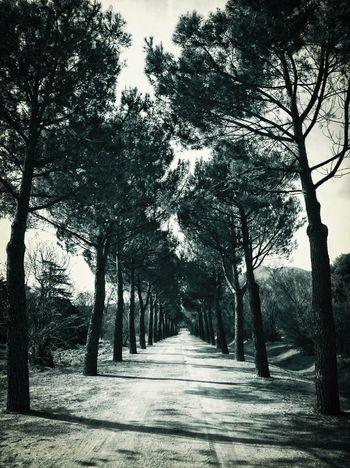 Trees Promenade Monochrome AMPt_community
