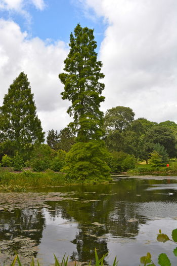 Pond Beauty In