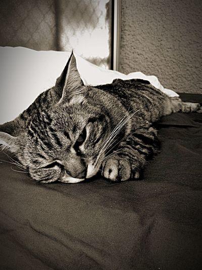 My Lovely Cat Sleeping ❤️