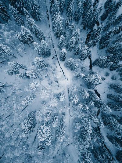 Winter Wonderland in the Black Forest Aerial Shot Dark Drone  From Above  Frozen Luftbild Magical Mystic Road Schwarzwald Winter Black Forest Blue Cold Drohne Drone Photography Dunkel Eingeschneit Landscape Mystisch Snow Straße Von Oben Winterlandscape Winterlandschaft