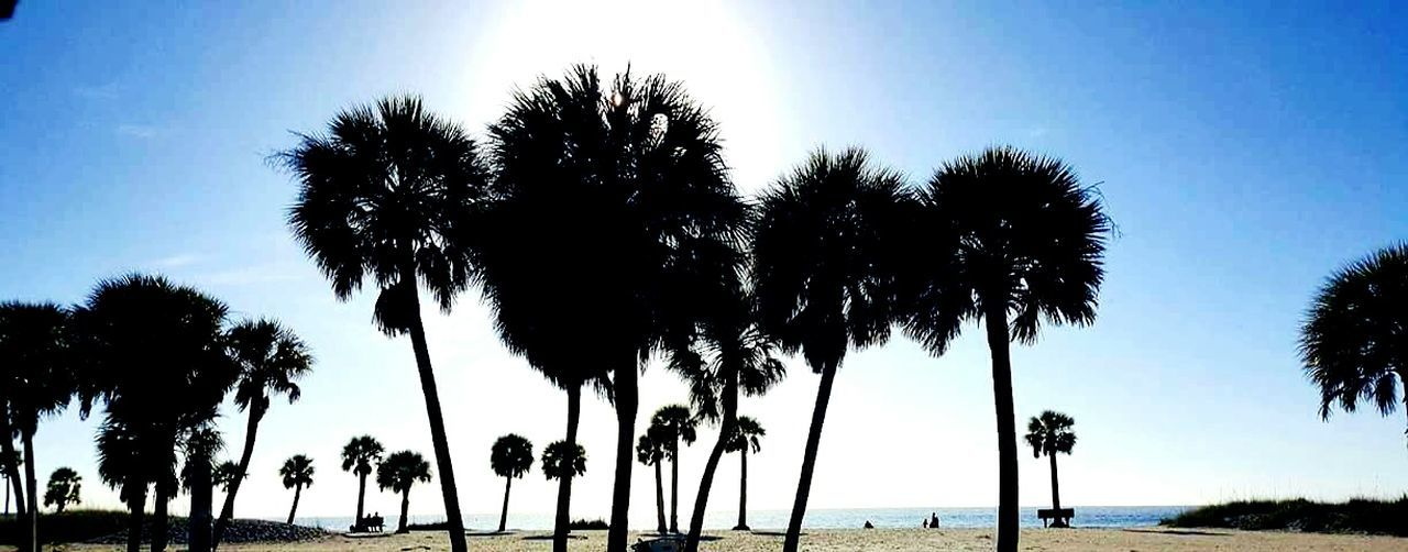 Feel The Nature Enjoy The View Enjoy Fresh Air Florida Life Nature_collection Vacations☺️🍹 Vacation Time Enjoy The Moment Enjoy The Little Things Vacation With My Best Friend Enjoying Life Florida2016 Florida Nature Palm Trees ❤❤ Warm Weather Nature Photography Palm Tree Silhouette Love Life On The Beach Enjoy The Sun Fred Howard Beach Florida Florida 2016 Beaches Of Florida Adventure Club