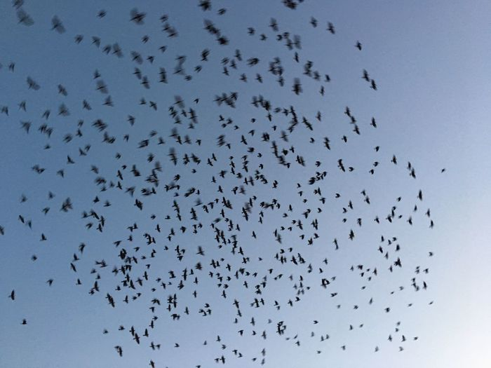 Flock of birds flying against sky