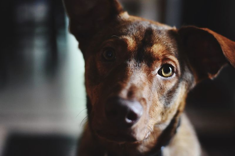 Close-up portrait of dog