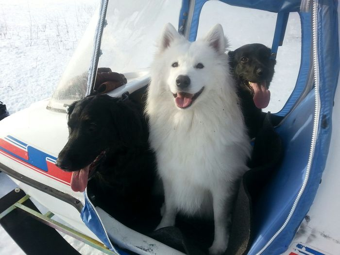 Snowmobile Relaxing My Dogs Are Cooler Than Your Kids I❤dogs Winter