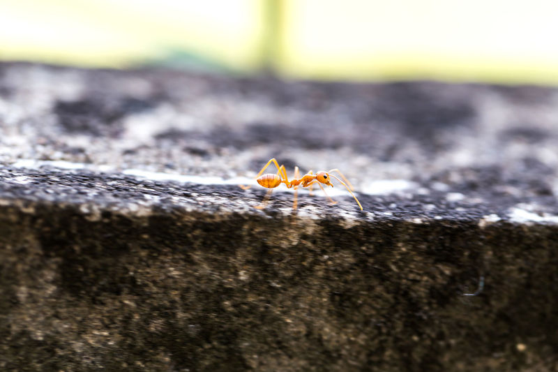 Little ant Ant