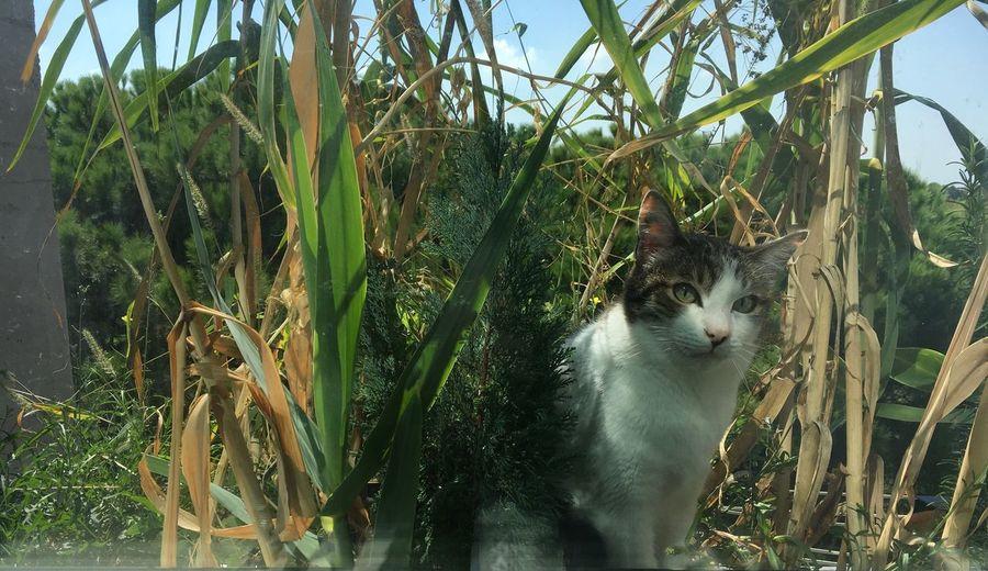 #gatto #gioiaemiliaromagna