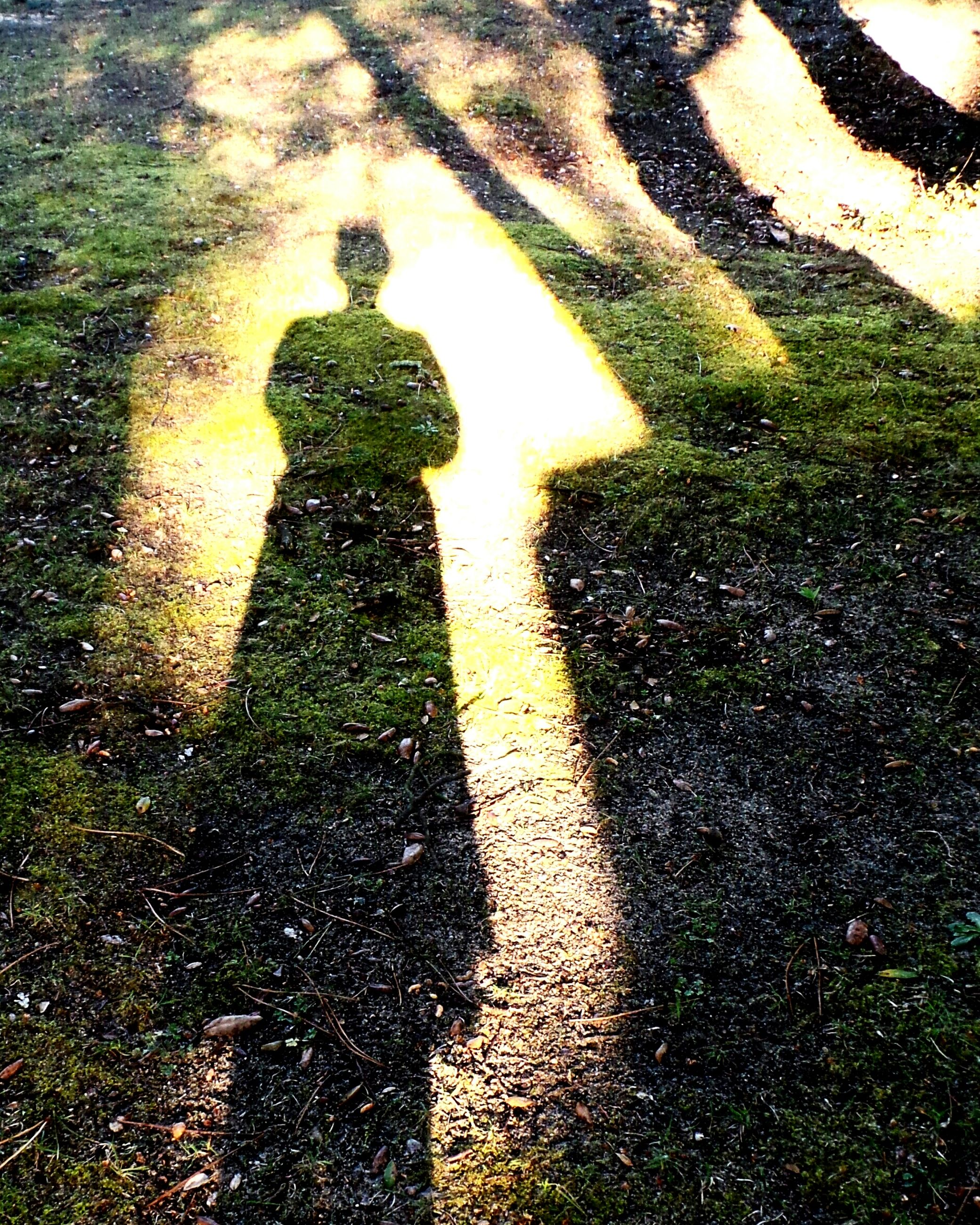 shadow, focus on shadow, sunlight, lifestyles, high angle view, leisure activity, silhouette, men, grass, unrecognizable person, tree, standing, street, outdoors, day, outline, nature