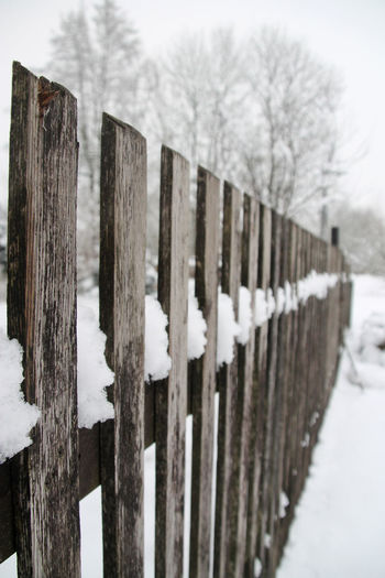 Bare Tree Close-up Cold Temperature Day Fence Fencepost Landscape Nature No People Outdoors Sky Snow Tranquility Tree Weather White White Background Winter Wood - Material Wooden Post
