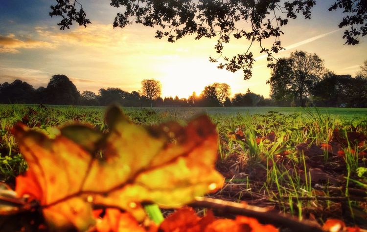 Autumn Sunrise Colors Of Autumn Landscape