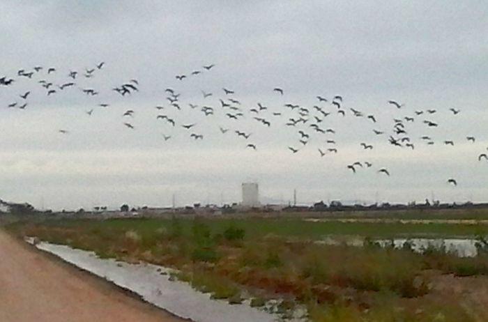 Flock Of Birds Casagrande Taking Photos Free Open Edit