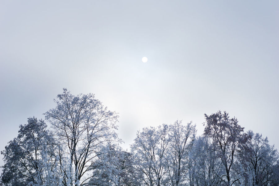 Peaceful winter morning Air Blue Cold Fresh Frozen Hazy  Hoar Frost Hoarfrost Landscape Morning Nature No People Outdoor Oxygen Peaceful Sky Sun Trees Treetop Treetops Winter Winter Morning Winter Trees