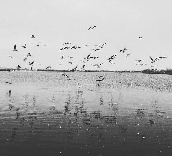 Hayat o anlardan ibarettir bir fotoğrafçı için. Bir fotoğraf için onlarca o an terkedilir.. İsmail Balı © 2016 www.ismailbali.net fb/ismailbaliphotography Ismailbalıphotography Moment Bw O An O_an Lake Seagulls Alone Nature Korfez Izmit