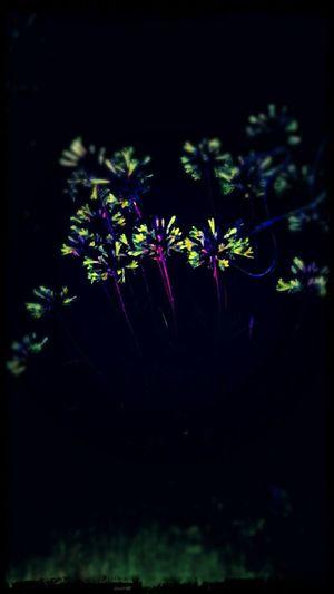 EyeEm Best Edits Midnight In The Garden Of Good And Evil EyeEm Gallery Alien Nation After Dark