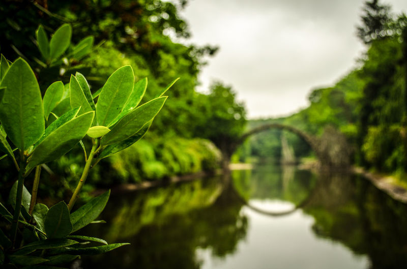 Kromlau Bridge closeup Beauty In Nature Bridge Close-up Closeup Day Focus On Foreground Green Green Color Growth Kromlau Leaf Nature No People Outdoors Park Plant Reflection Scenics Sky Tranquility Tree Water Rakotz Rakotzbridge Been There.