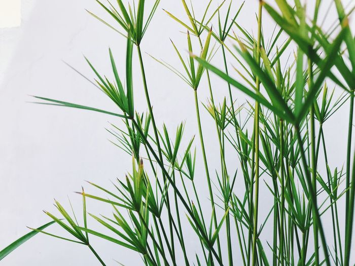 Growth Plant Green Color Nature Beauty In Nature No People Close-up Day Grass Leaf Freshness Plant Part Tranquility Sky Outdoors Focus On Foreground Low Angle View Blade Of Grass Field Flower Stalk