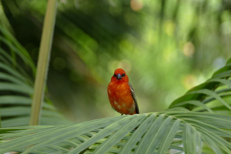 Animal Themes Animal Wildlife Animals In The Wild Beauty In Nature Bird Close-up Day Green Color Growth Leaf Nature No People One Animal Outdoors Perching Plant Tree