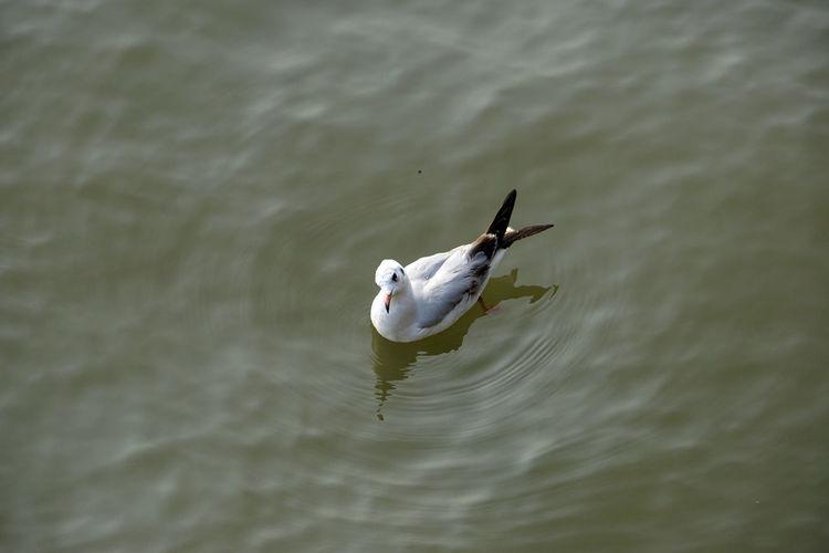 Seabirds Birds Seagulls And Sea Seagulls Nature Day No People Seagull Water Vertebrate Bird Animal Animal Themes Animals In The Wild Animal Wildlife Single Seagull