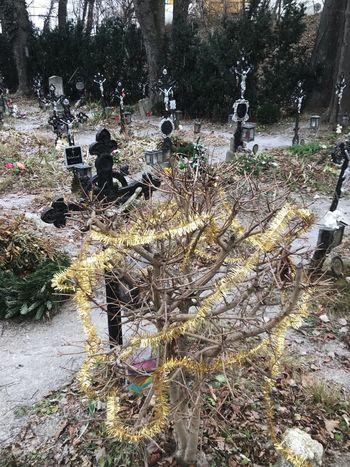 Friedhof der Namenlosen Vienna Snow Christmas Cemetary Death Cross Graveyard Friedhof Friedhofdernamenlosen Plant Tree No People Nature Land Field Day Tranquility Environment Park Outdoors