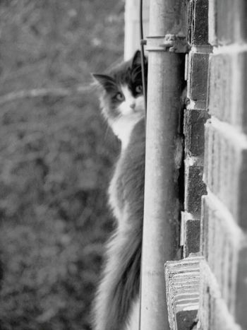 Misskitty Furbaby Windowsitting Cat Cats Feline