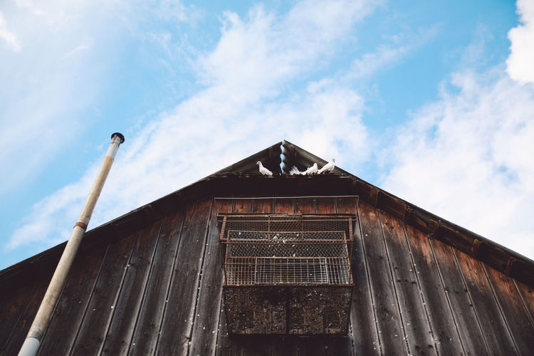 Low angle view of birds perching on barn against sky