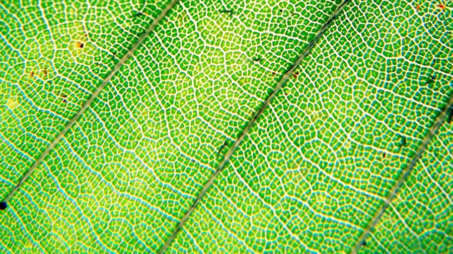 SuperMacro Macro Leaves Getting Creative Green Eye4photography  EyeEm Nature Lover Nature Natural Beauty Deceptively Simple