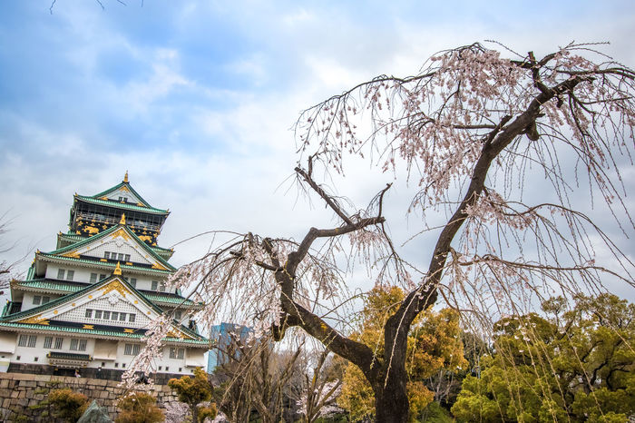 Osaka Castle and sakura blooming, cherry blossom in spring season at osaka, Japan. Architecture Building Exterior Canal Cloud - Sky Famouns Flower Hanami Sakura  Japan Japanese  Kansai Landmark Landmark Building Ohanami OSAKA Park Park - Man Made Space S Sakura Sigthtseeing Sky Travel Destinations
