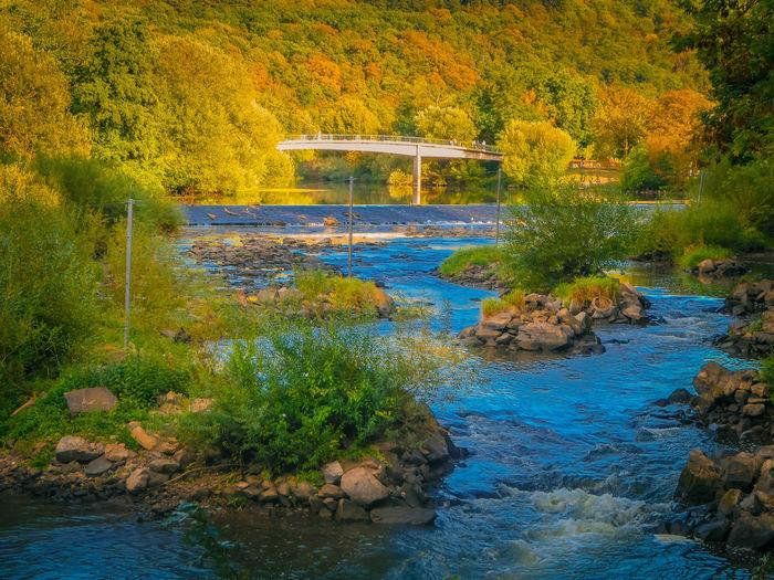 Bridge over stream in forest during autumn