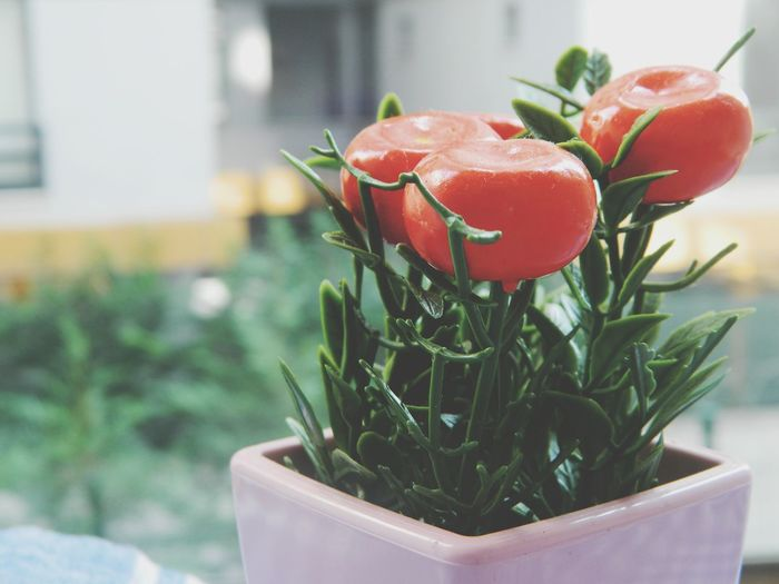 Close-up of strawberry plant on table