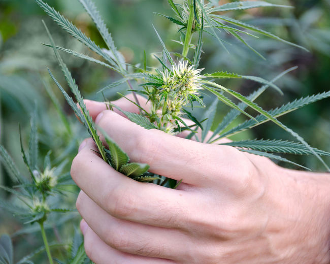 Close-up of hand holding plant