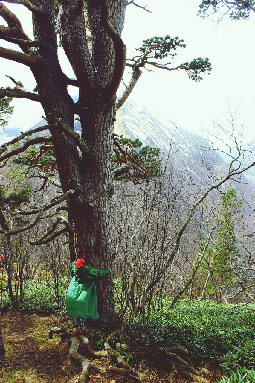 tree, tree trunk, one person, day, branch, rear view, real people, nature, scarecrow, green color, growth, outdoors, full length, bare tree, grass, beauty in nature, sky, people