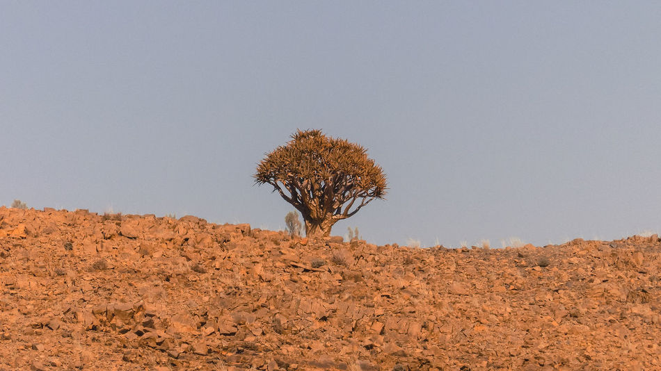 Quivertree in Southern Namibia Arid Climate Beauty In Nature Clear Sky Day Extreme Terrain Geology Landscape Mountain Nature No People Non-urban Scene Outdoors Physical Geography Quivertree  Remote Scenics Solitude Tranquil Scene Tranquility