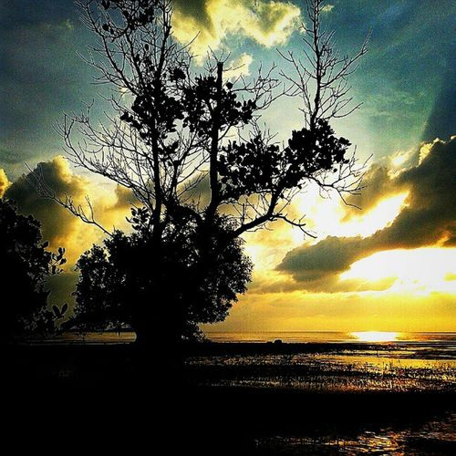 Me and the Sunset Silhoutte of the Trees Teamsukasuka Andrography Beach Sky Keprifoto Karimun INDONESIA