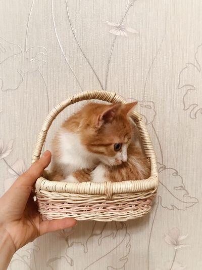 Hand holding cat
