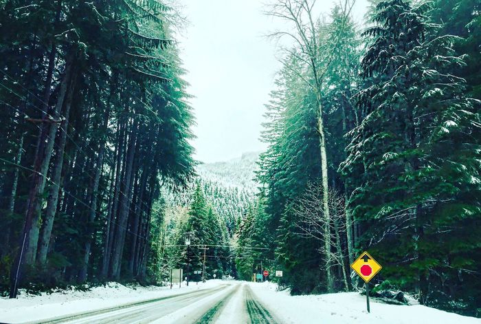 Tree Nature The Way Forward Cold Temperature Forest Beauty In Nature Growth Snow Day Outdoors Road Winter Tranquil Scene Tree Trunk Scenics Tranquility No People Sky Mount Rainier Washington State Seattle, Washington Seattle Miles Away