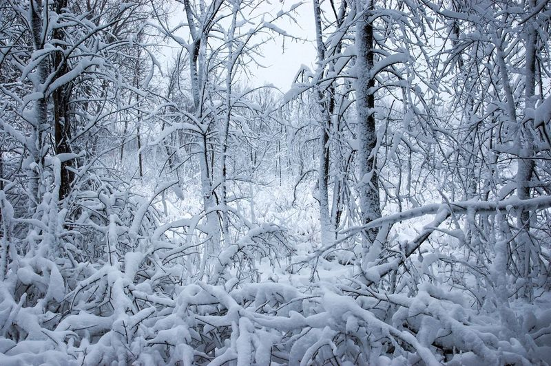 winter in the woods Beauty In Nature Cold Temperature Forest Frozen Landscape New Snow On Trees Outdoors Snow Tranquil Scene Winter Winter Scenes Winter Wonderland