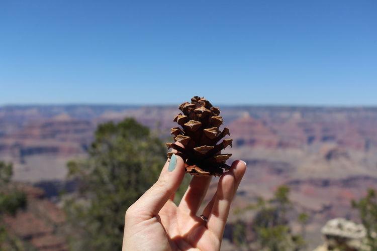 Vintage Desert Grand Canyon Tree Pine Cone