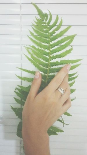 Hand Flovers Natural Beauty Minimalism Light White Tumblr Like It Gently