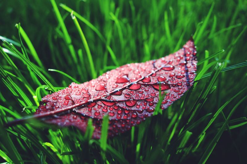 Plant Growth Drop Wet Close-up Water Nature No People Green Color Day Grass Focus On Foreground Rain RainDrop Plant Part Vulnerability  Leaf Beauty In Nature Fragility Dew