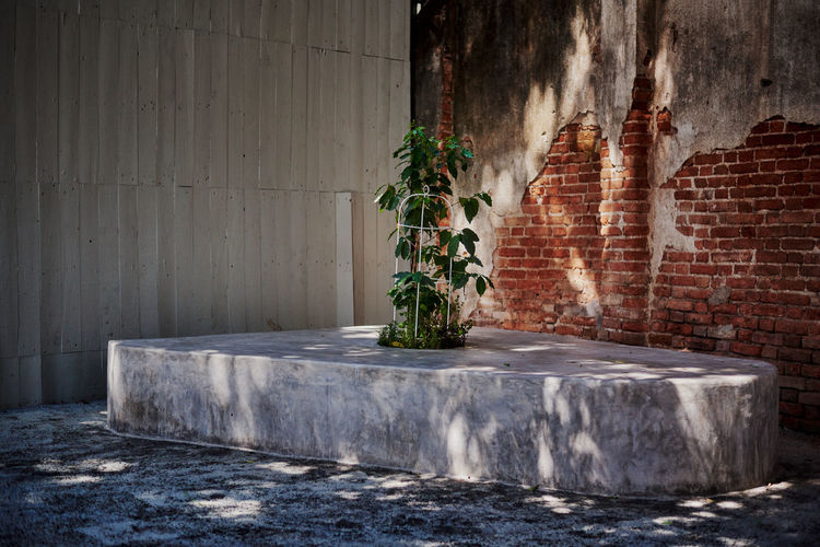 Potted plant against wall