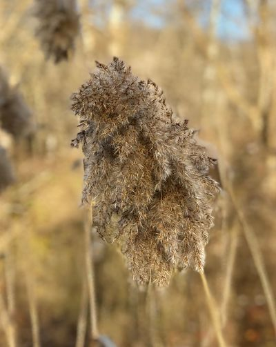 EyeEm Selects Nature Focus On Foreground Close-up Plant Day Growth Beauty In Nature Dried Plant Outdoors Fragility Flower Head No People