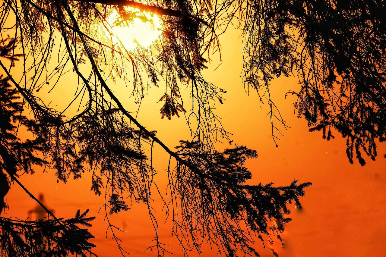 sunset, tree, nature, beauty in nature, orange color, branch, sky, no people, tranquility, scenics, growth, tranquil scene, low angle view, outdoors, silhouette, day, close-up