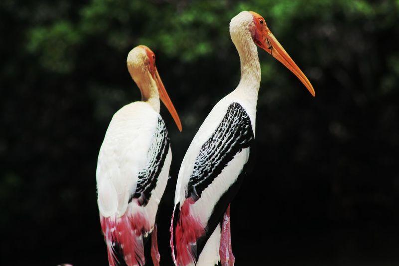 Close-up of cranes