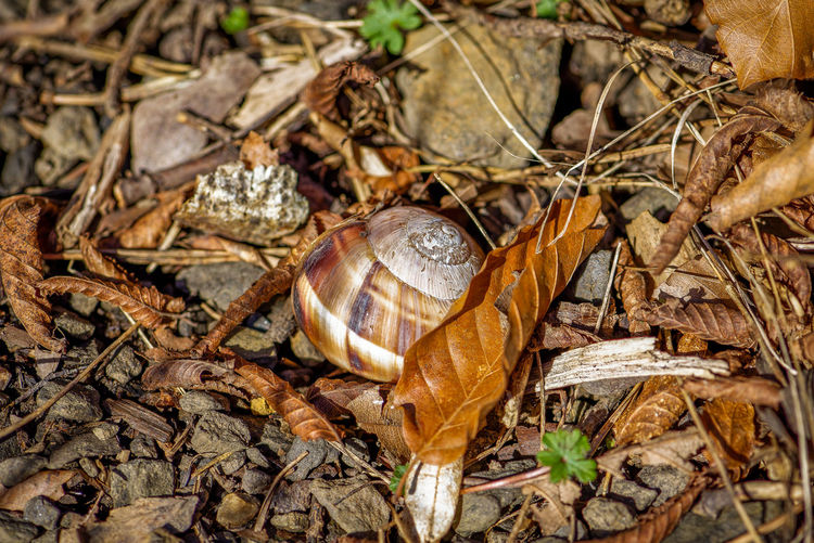 High angle view of shell on dry leaves