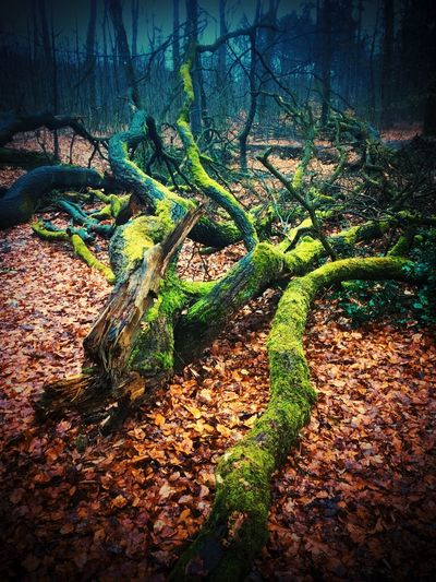 No People Nature Growth Plant Tree Day Green Color Beauty In Nature Outdoors Plant Part Forest Moss