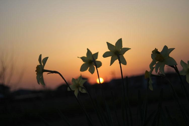 Close-up of silhouette plants against orange sky