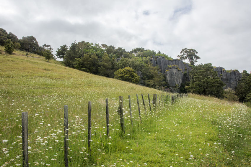 Rural countryside landscape with limestone rock and fence line on a cloudy day in Kawakawa, New Zealand Kawakawa New Zealand Landscape Waiomio Valley Nature Field Land Scenics - Nature Fence Boundary Barrier Wooden Post Post Grass Beauty In Nature Rock - Object Limestone Geology Fence Line Diminishing Perspective Wildflower Physical Geography Environment Cloud - Sky Tree