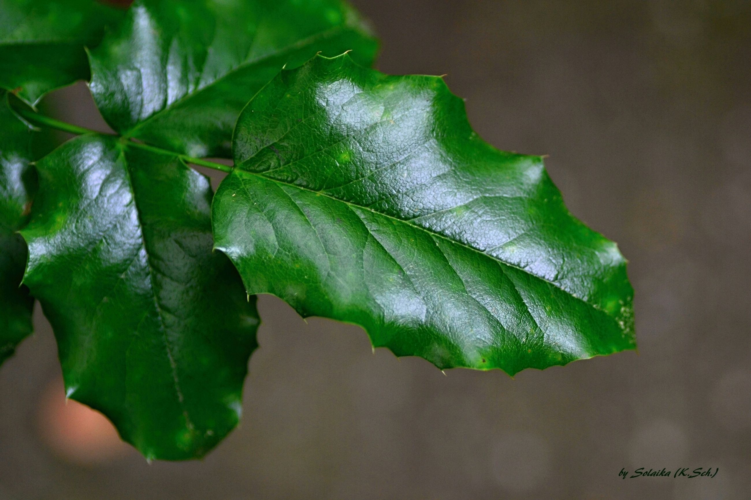 leaf, close-up, green color, growth, leaf vein, focus on foreground, plant, nature, beauty in nature, freshness, fragility, selective focus, leaves, drop, natural pattern, green, outdoors, no people, day, wet
