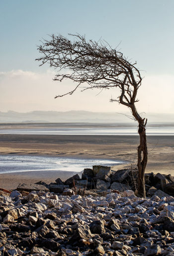 Lone tree, Silverdale. Sky Water Sea Land Beach Beauty In Nature Rock Solid Scenics - Nature Tranquility Tranquil Scene Nature Rock - Object Horizon Over Water Horizon Stone - Object No People Idyllic Non-urban Scene Outdoors Pebble