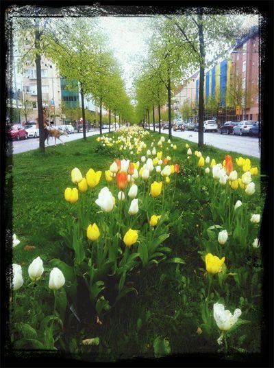 Urban Nature Flower Collection Spring Walking Around